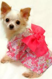 кучето като моден аксесоар