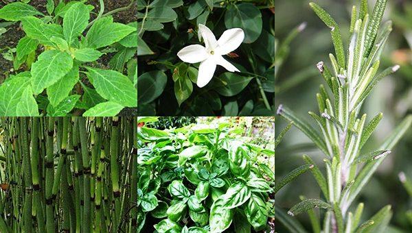 Това са Растенията, Които Носят Положителни Енергии в Дома Ви