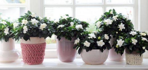 5 Растения, които Можете да Поставите в Спалнята си, за да Спите По-Добре